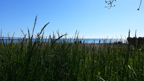 在海滩的绿色春天草黑海 免版税库存照片
