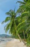 在海滩的绿色棕榈树 库存图片