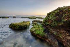 在海滩的绿色生苔石头 免版税库存照片