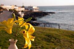 在海滩的黄色百合 免版税图库摄影