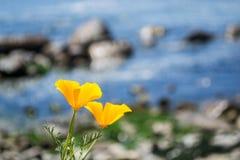 在海滩的黄色花 图库摄影