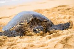 在海滩的绿色seaturtle 免版税库存照片