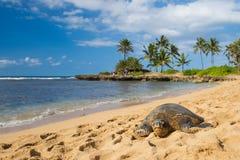 在海滩的绿色seaturtle 免版税库存图片