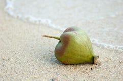 在海滩的Fuit在素林海岛 免版税库存图片