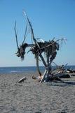 在海滩的Hokitika NZ雕塑 免版税库存照片
