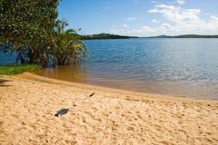 在海滩的Paddel湖Nhambavale在莫桑比克 免版税图库摄影