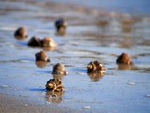 在海滩的Shels 库存照片