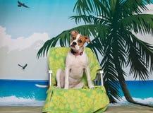 在海滩睡椅的小狗 库存图片
