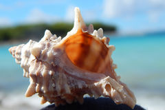 在海滩(穆泰尔岛,克罗地亚)的贝壳 免版税库存照片
