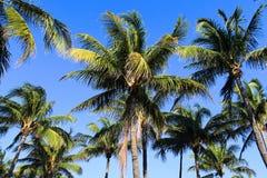 在海滩背景的棕榈树 免版税库存图片