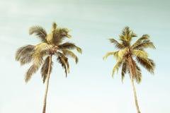 在海滩葡萄酒样式的可可椰子树 免版税库存照片