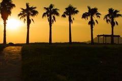 在海滩附近的六棵树在日落 库存照片