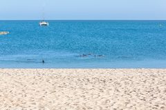在海滩附近的海豚 图库摄影