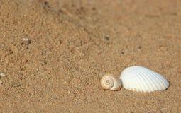 在海滩,在沙子的两海壳 免版税库存图片