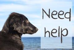 在海洋,文本需要帮助的狗 库存照片