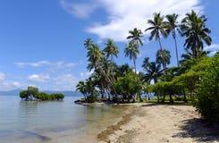 在海滩,瓦努阿岛海岛,斐济的棕榈树 免版税库存图片