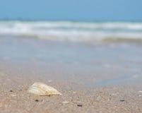 在海滩,被弄脏的背景的海壳 免版税库存图片