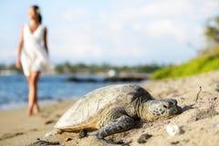 在海滩,走的妇女,大岛,夏威夷的乌龟 免版税库存图片