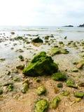 在海滩, Onna,冲绳岛的绿色岩石 免版税库存图片