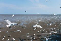 在海Bangpu Samutprakarn泰国的海鸥鸟 免版税库存图片