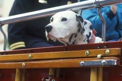 在消防车,洛杉矶,加州的达尔马提亚狗 库存图片