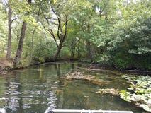 在淡水湖哈密尔顿阿肯色的黄色lillies 库存图片