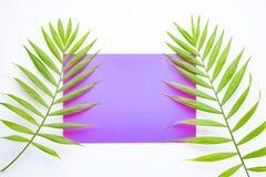 在淡紫色和紫色背景的热带棕榈叶 r 在样式的夏天 棕榈叶 o r 图库摄影