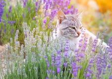 在淡紫色的野生猫 免版税图库摄影