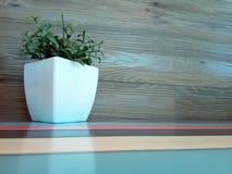 在淡色桌上的小植物 免版税库存照片