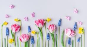 在淡色桌背景的美丽的春天花 贺卡为国际妇女天 创造性的构成 平的位置 库存图片