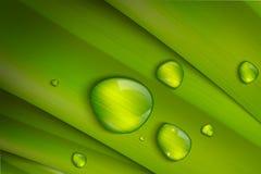 在淡色的传染媒介背景与绿色 库存图片