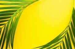 在淡色背景的热带棕榈叶 密林叶子 库存照片