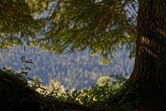在淡黄绿的草丛 免版税库存图片