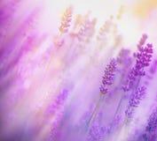 在淡紫色的软的焦点 库存图片