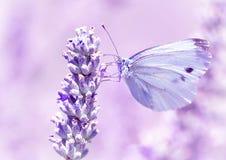 在淡紫色花的柔和的蝴蝶 库存照片