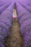 在淡紫色领域中 免版税图库摄影