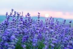 在淡紫色领域的日落在一个夏天 免版税库存照片