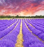 在淡紫色领域的日落 库存照片
