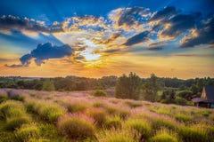 在淡紫色领域的日落 库存图片