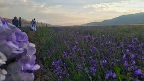 在淡紫色领域的订婚照片 库存照片