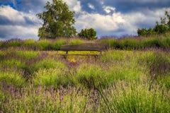 在淡紫色领域的长凳 库存图片