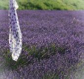 在淡紫色领域的围巾 免版税库存照片
