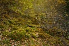 在深刻的森林风景里面 图库摄影