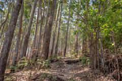 在深刻的西部ghat的森林足迹 库存照片