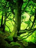 在深发光的春天森林里绿化色的森林地树 免版税库存照片
