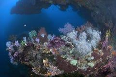 在深海里的墙壁的壁架的五颜六色的珊瑚礁 免版税库存照片