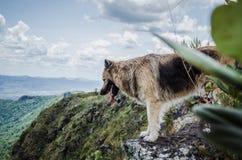 在深渊的狗 免版税图库摄影