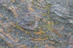 在深灰石头的地衣与橙色条纹 免版税库存图片