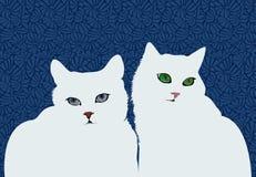 在深蓝背景的白色猫 免版税库存照片