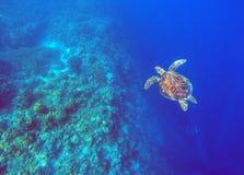 在深蓝色海水的绿浪乌龟 海草龟水下的照片 库存图片